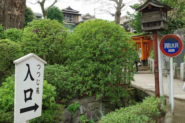 2016/04/09根津神社つつじ祭り-45