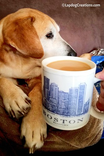 Sophie knows weekends are all about R 'n R - complete with coffee & cuddles. #BostonStrong #Coffee #HoundDog #LapdogCreations ©LapdogCreations