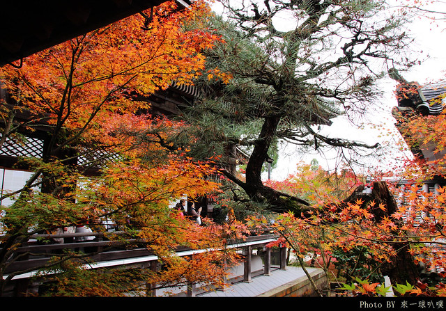 京都-永觀堂112
