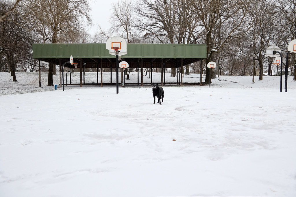 Our dog Ellie stands on a snow-covered basketball court
