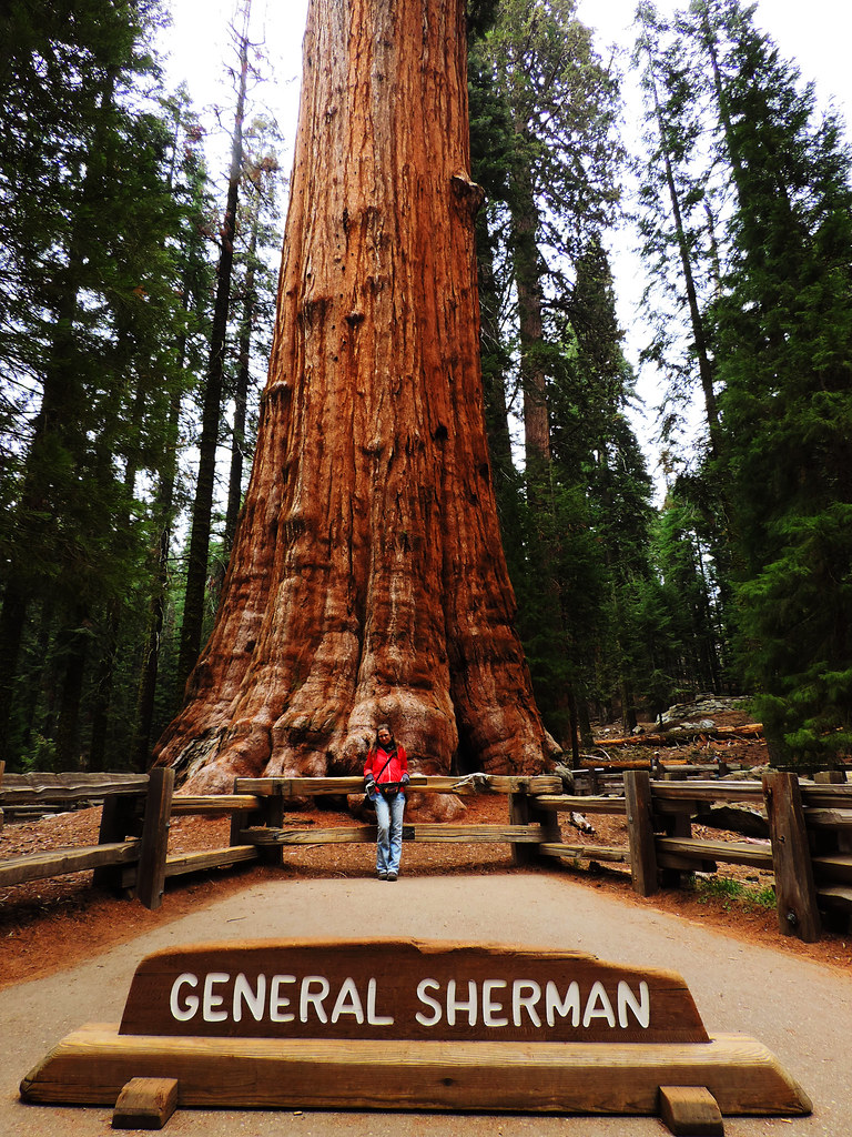 General Sherman, Sequoia National Park, CA, USA