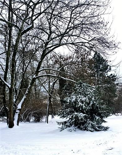winter white snow landscape bulgaria lumia lumia1020