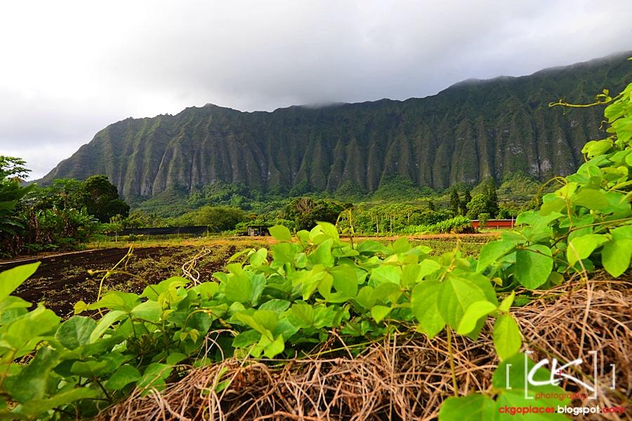 Hawaii_0229