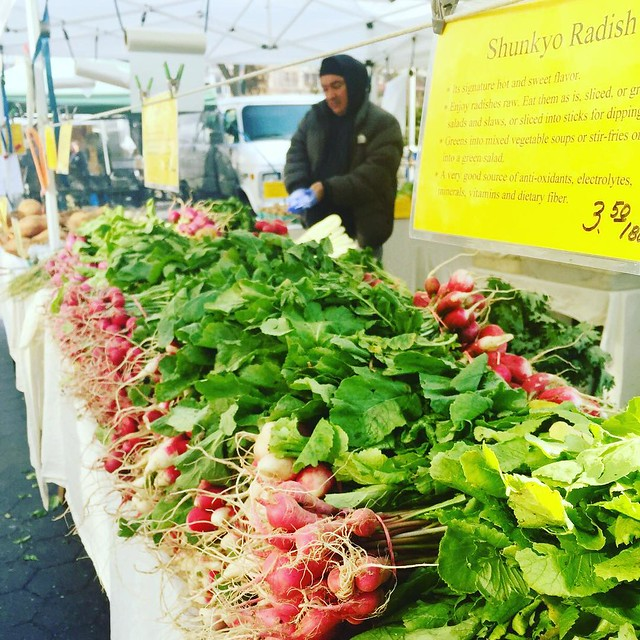 Union Square Greenmarket radishes