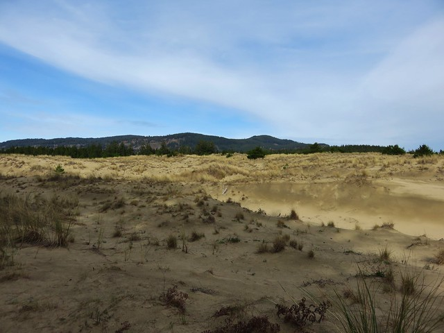 Dunes along the Sutton Creek Trail