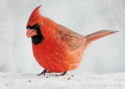 Cardinal 6338-15