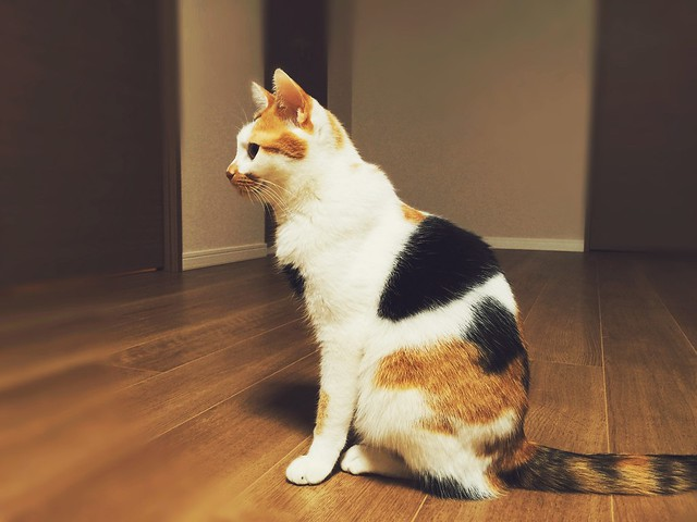 #cat #cats #catsofinstagram #catstagram #instacat #instagramcats #neko #nekostagram #猫 #ねこ #ネコ ネコ部 #猫部 #ぬこ #にゃんこ #ふわもこ部