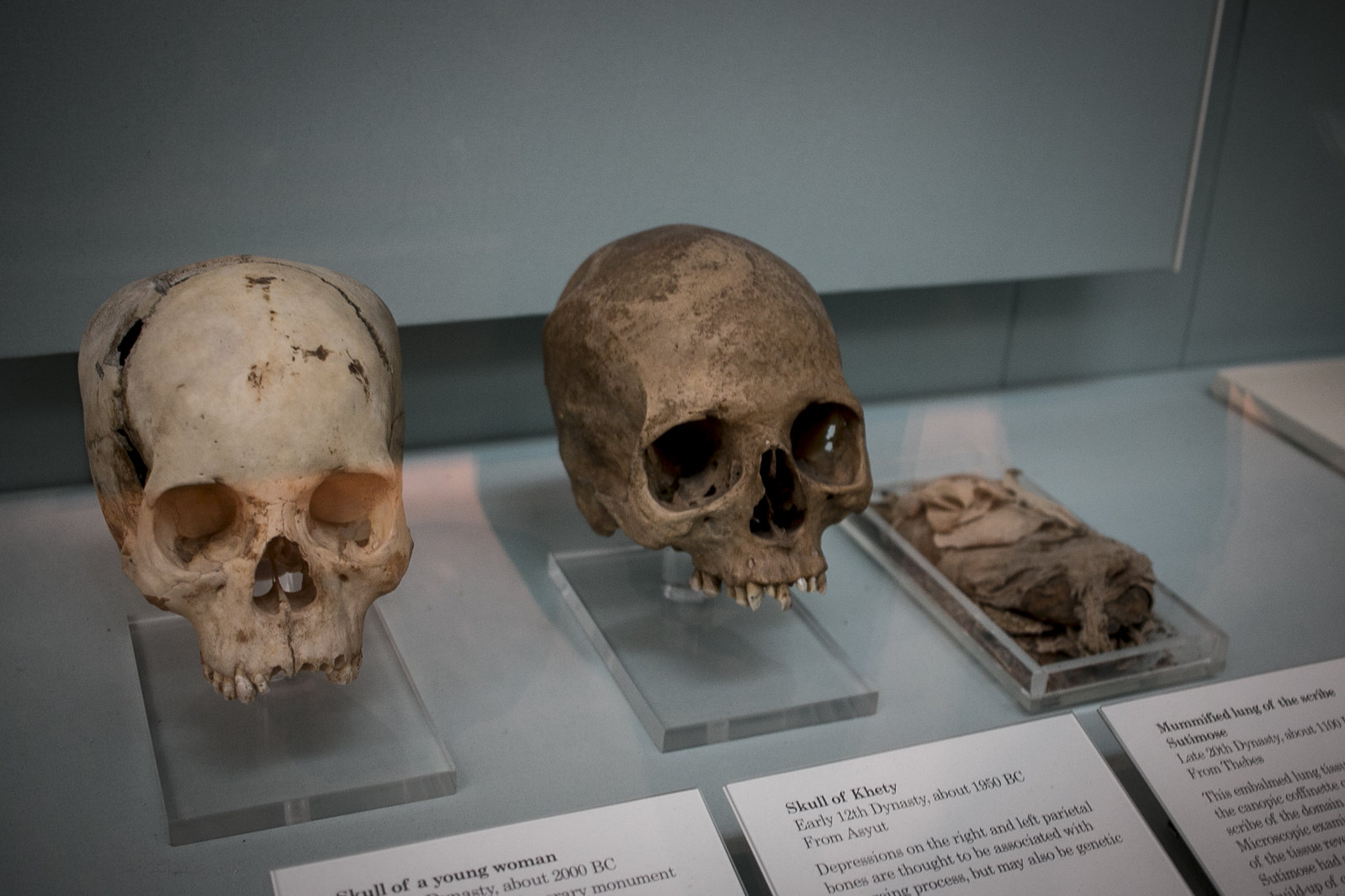 human skulls, british museum