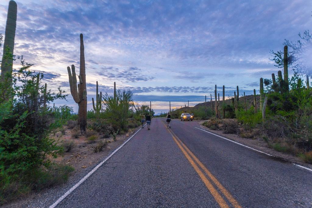 Saguaro-8