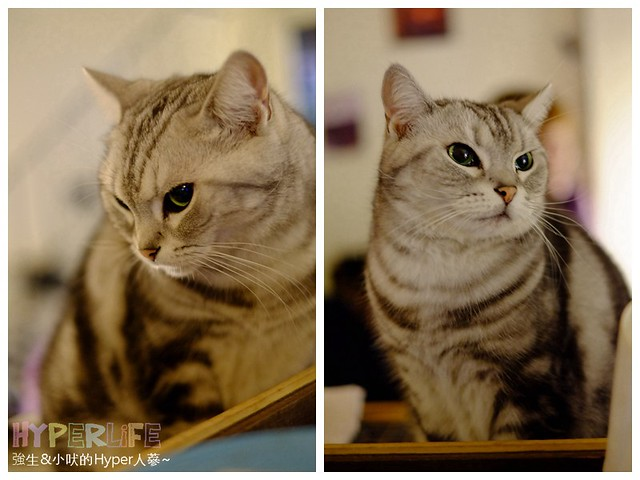26106559555 b07268ed63 z - 超可愛貓咪寵物餐廳【巷子有貓】,逢甲巷弄無菜單美食~一定要預約才吃的到的日式家常菜!(已歇業)