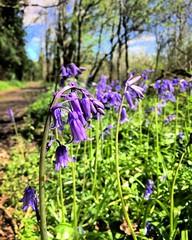 Vu mon inclination pour les petites fleurs, je me dois de participer au challenge d'@igerscognac ! #flowerspirit #igerscognac  #flowers #nature #naturelovers #countryside #Charente #PoitouCharentes #France