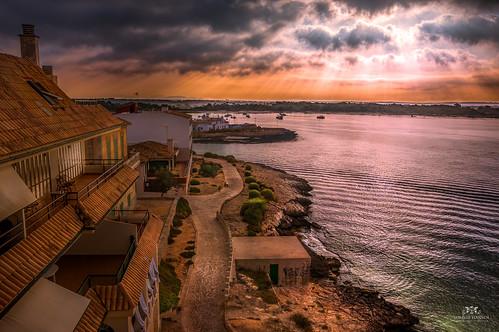 image_4_cani_del_puerto