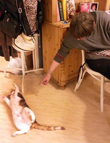bjorns_sverigexmas-cocotesscats2