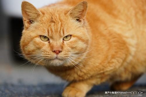 瀬戸の島猫