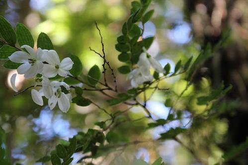 Bosque templado chilote