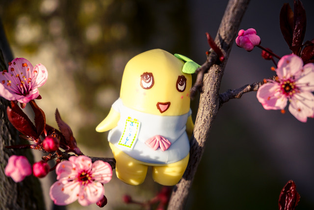 Spring has come, Plum Blossoms are ready to bloom!