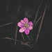 Transmutando flores by theoswald