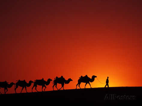 keren-su-camel-caravan-at-sunrise-silk-road-china