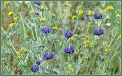 High Desert Wildflowers