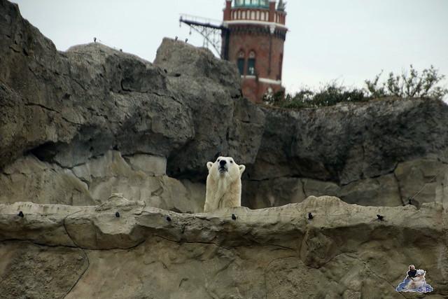 Eisbär Lili im Zoo am Meer Bremerhaven 10.04.2016 Teil 1 100