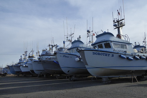 Salmon fishing boats in Naknek_3