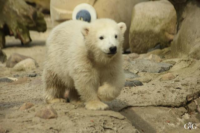 Zoo Bremerhaven 10.04.16 1.Teil98