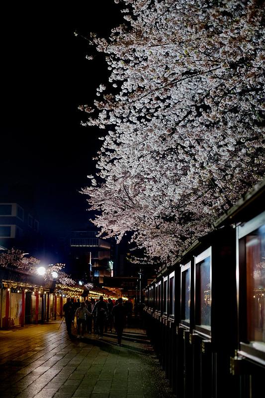 仲見世通りと桜