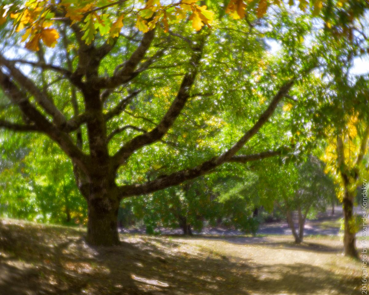 Adelaide Lofty Botanic Garden