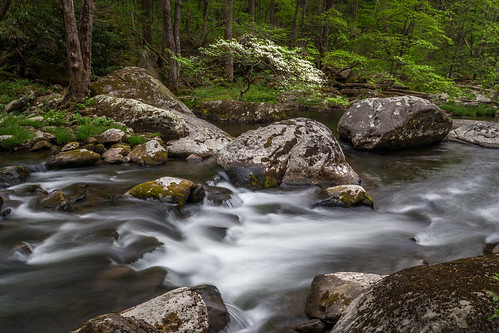 dogwoodtree tree rapids littleriver tremont institute middleprong tennessee gsmnp greatsmokymountains nationalpark landscape river serene spring bloom blossoms boulders rock rocks le long exposure tn
