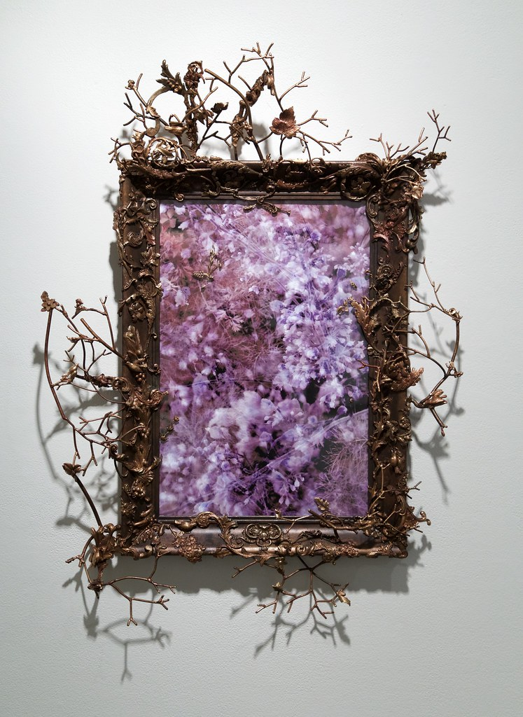 Foeniculum Photo Based Image and Mixed Media Frame 2015