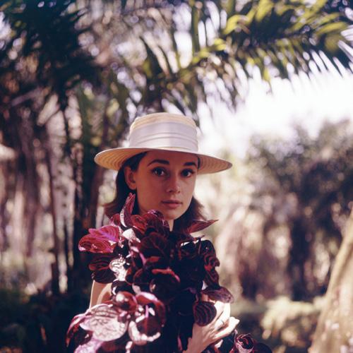 Hepburn2