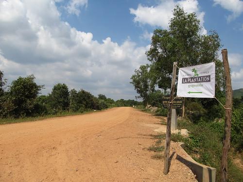 Plantation belge de poivre de Kampot
