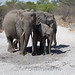 Elephants by Marcellinissimo