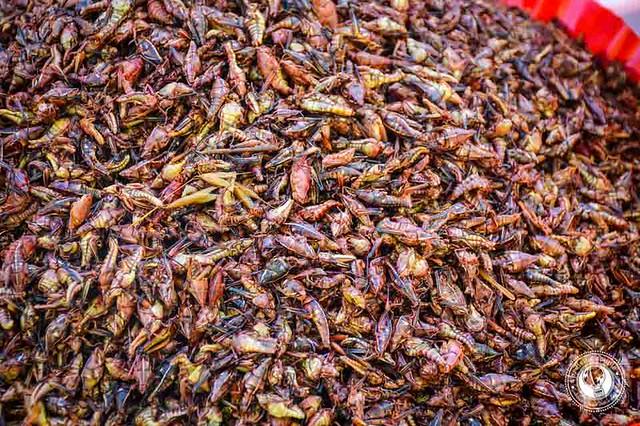 Grasshoppers in Oaxaca