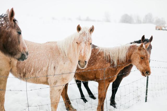 Snow-Ponies-Tone-7