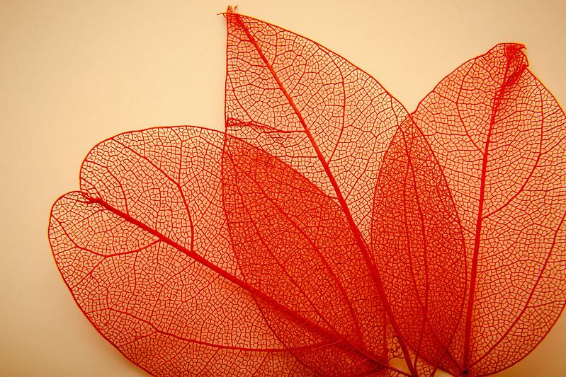 Pretty Leaves...HMM (Explore 14/3/16)