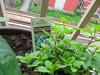 My new herb garden