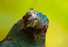 Kuala Lumpur birds-8