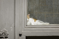 Cat, Soho, Sun