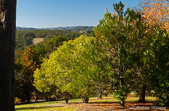 Mount Lofty Botanic Gardens, Crafers.