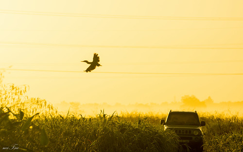 morning bird fog sunrise woodland nikon trinidad nikkor 70300mm grassland greenheron butorides virescens d5200