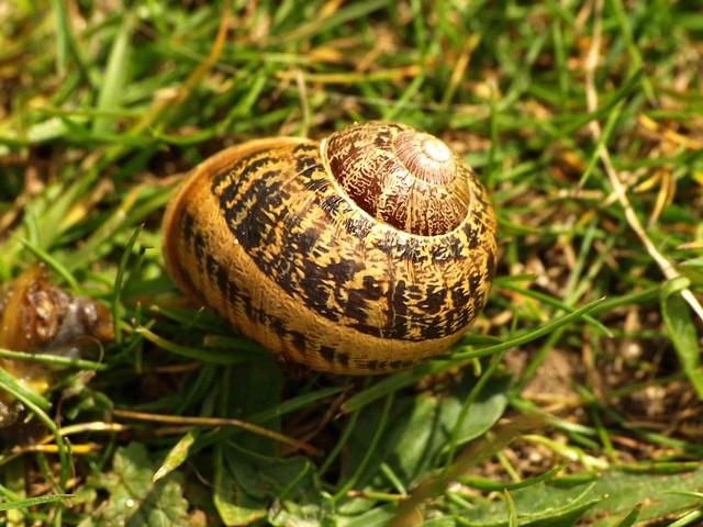 Snail 182