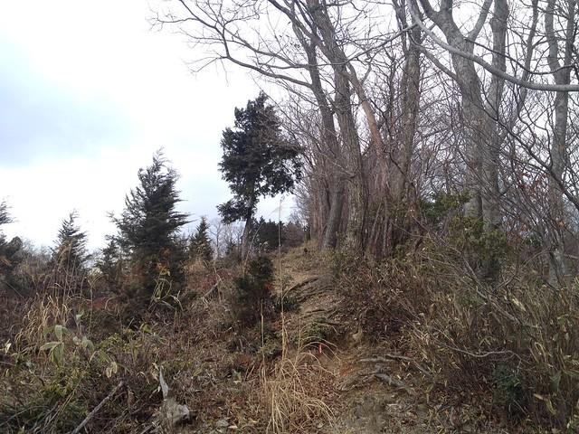 小島山~ムネ山 登山道
