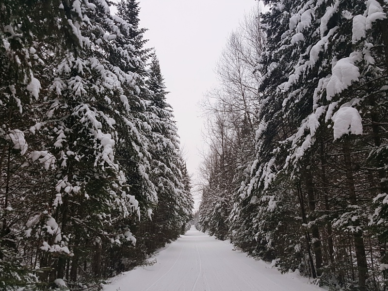 Snowmobile trail Quebec