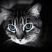 A Cat Named Karma by Gene Wilburn