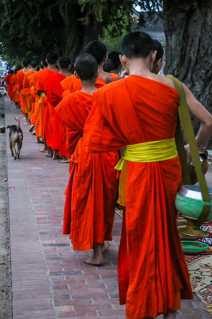 Buddhist monks collecting alms at dawn, Luang Prabang, laos ルアンパバーン、早朝の托鉢