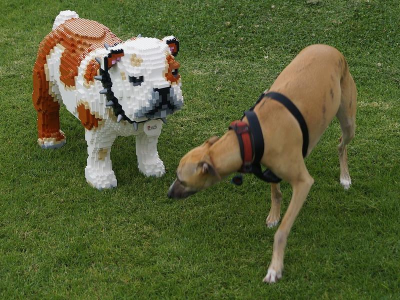 LEGO Bulldog