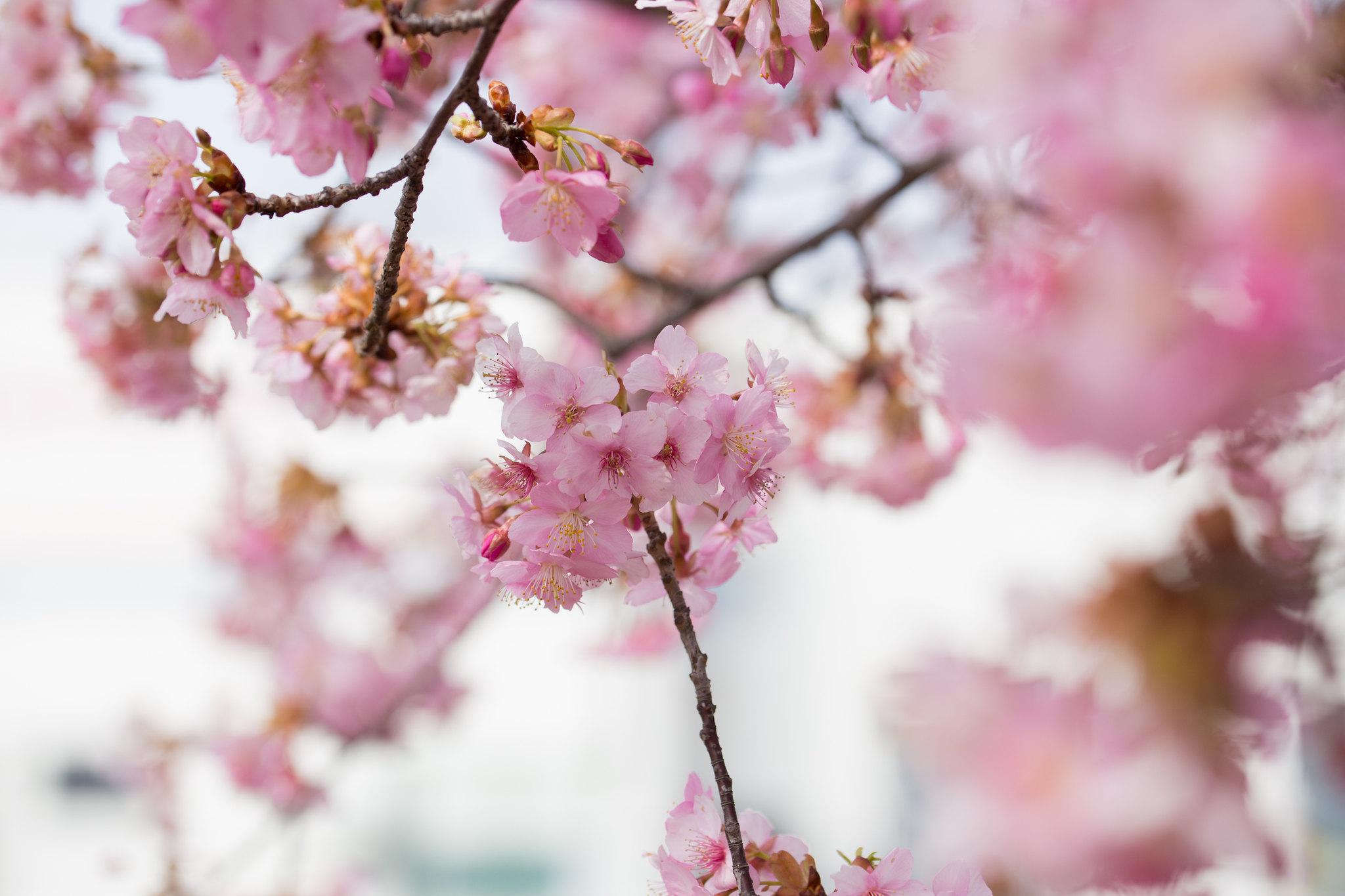 2016-03-04 カワセミ 001-27