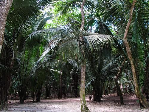 Lamanai et sa forêt tropicale