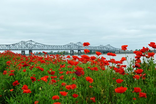 flowers red mississippi nikon poppies natchez d3200